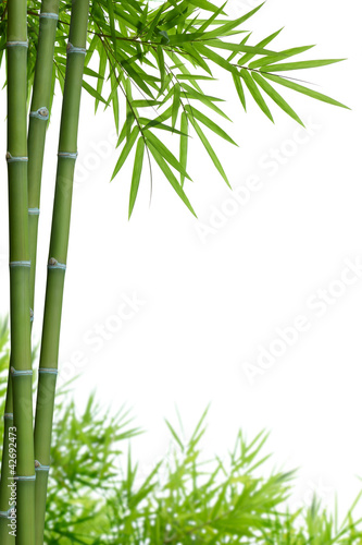 Naklejka premium bambus z liśćmi