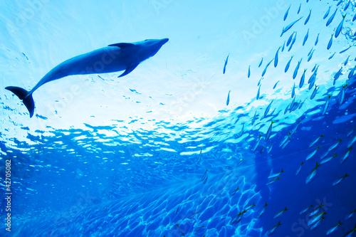 Foto op Canvas Dolfijn イルカ 01