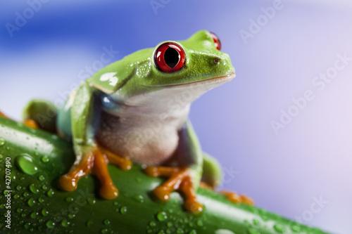 Tree frog Tableau sur Toile