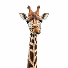 Fototapeta Funny Giraffe face