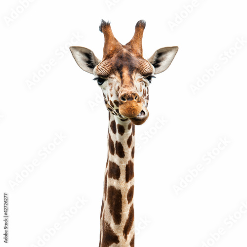 Funny Giraffe face Canvas Print