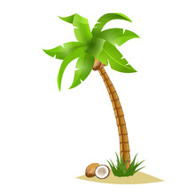 Palm Tree And Coconut