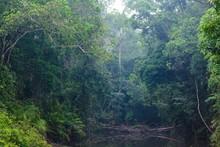 Wild Jungle Landscape