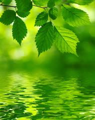 FototapetaGreen leaves