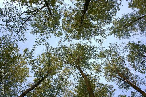 Fototapeta Patrząc w niebo obraz