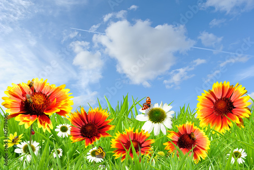 Aluminium Prints Ladybugs Colorful flowers