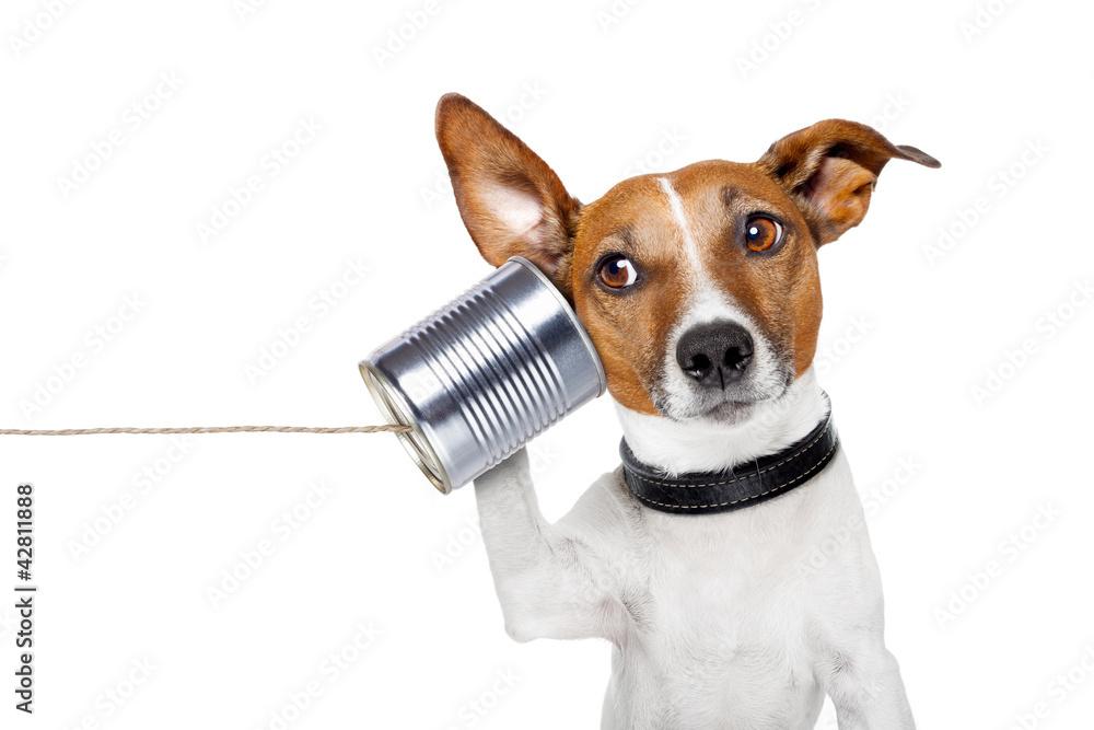 dog on the phone - obrazy, fototapety, plakaty