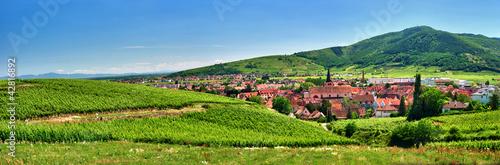Photo Vignoble  sur les hauteurs de Turckheim , Alsace (Fr).