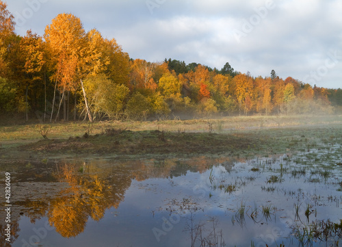 Kolekcje specjalne naklejek mokradla-jesienia