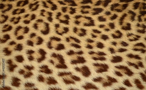 Poster Leopard leopard tiger skin texture background