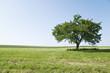 canvas print picture - Baum auf Wiese