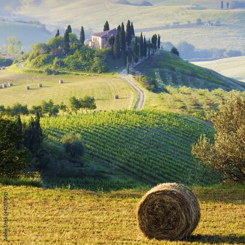 Fotografie, Obraz  campagna Toscana, Italia
