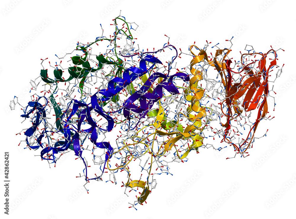 Fototapeta Enzyme Alpha-Amylase. 3D molecular structure