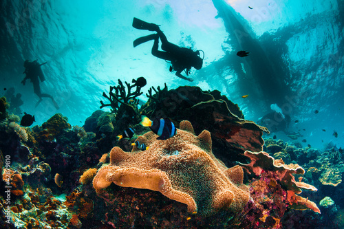 Photo Stands Diving Busy Sea Scape