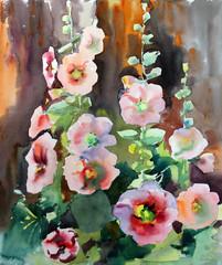 FototapetaWatercolor painting of the beautiful flowers mallow.