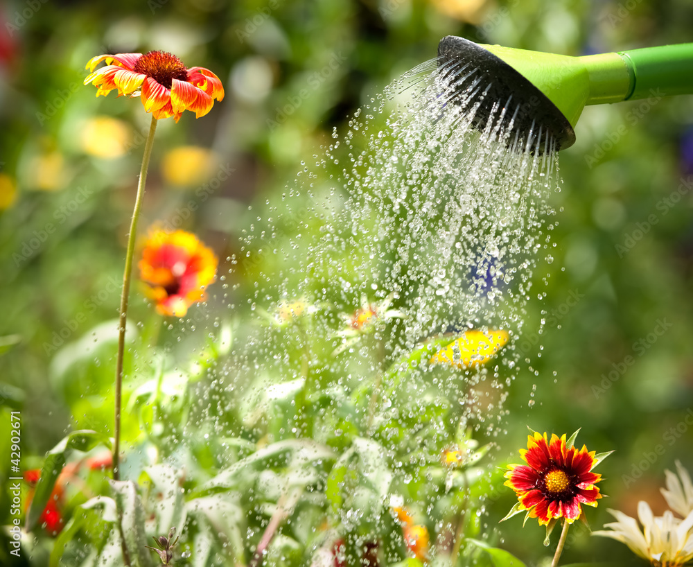 Fototapety, obrazy: Watering flowers