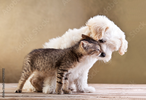 Staande foto Kat Friends - dog and cat together