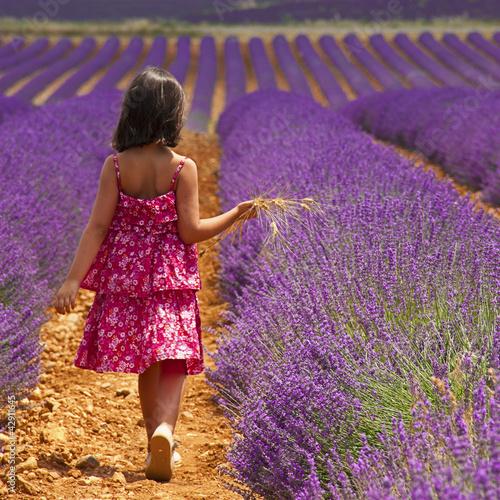 Poster Prune Provence - Enfant dans les champs de lavandes