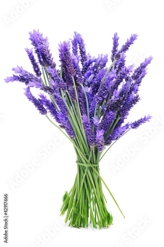 bunch of lavender Canvas-taulu