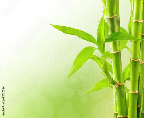 bambusowy-tlo-z-kopii-przestrzenia