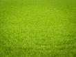 Leinwanddruck Bild - Grass Background