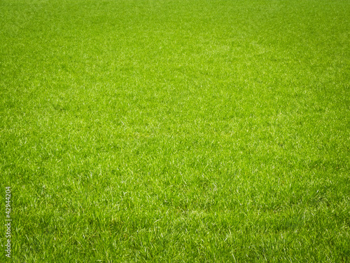 Deurstickers Gras Grass Background