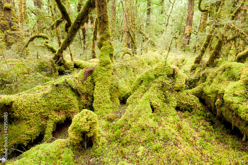 Naklejki dżungla  dzungla-lasow-deszczowych