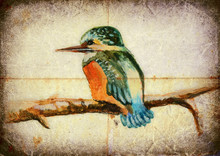 Colorful Bird Of Our Area.  The Kingfisher