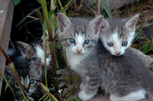 Four Kittens By The Barn