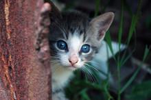 Kitten Peeking From The Rusty Step Of The Rustic Farmer's Barn