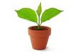 canvas print picture - pflanze in topf