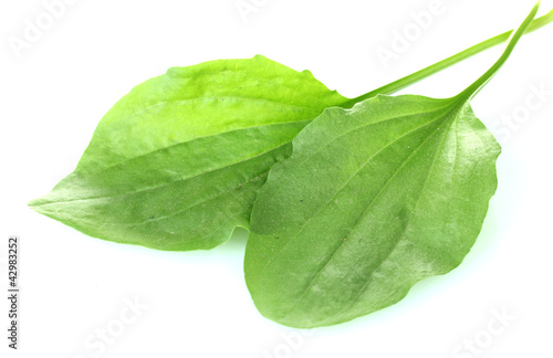 plantain leves isolated on a white #42983252