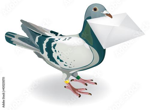 Fotografie, Tablou gołąb pocztowy list