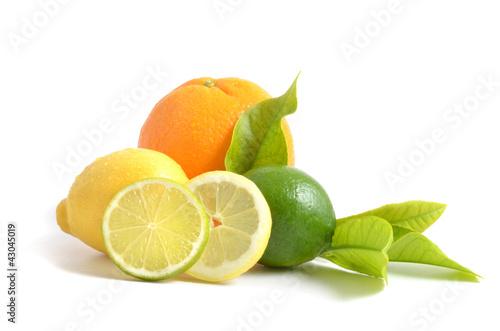 Poster Fruits Zitrusfrüchten