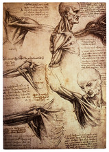 Old Anamtomical Drawings By Leonardo DaVinci