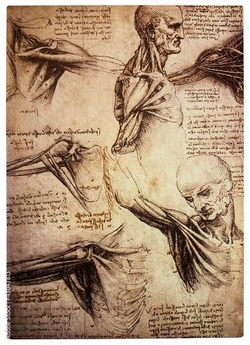 Plakat na zamówienie Old anamtomical drawings by Leonardo DaVinci