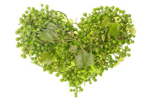 Green Grapes Heart