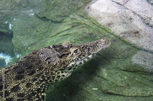 Door stickers Crocodile Kuba Krokodil