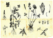 Hand-drawn Collection - Medici...