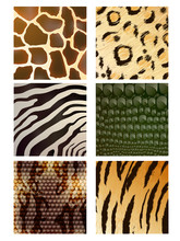 Vector Set Of Different Animal Skins