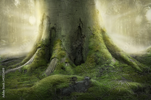 Fotografie, Tablou  Old Tree Roots