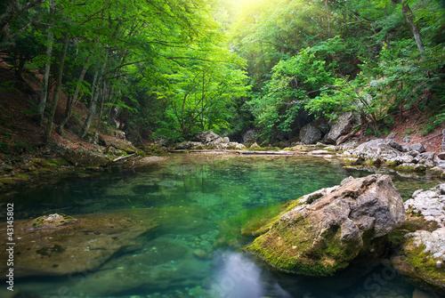 Poster Rivière de la forêt River deep in mountain