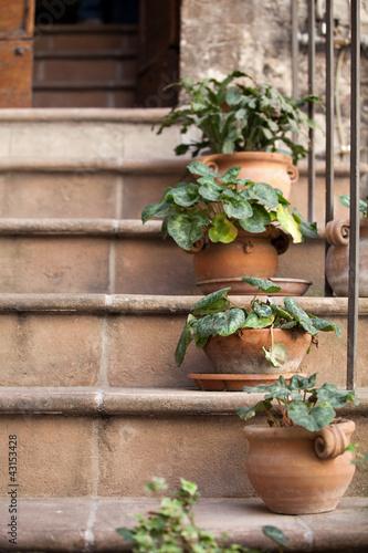 Fototapeta schody  kwiaty-w-doniczkach-na-kamiennych-schodach-sredniowiecznego-domu-w-asyzu