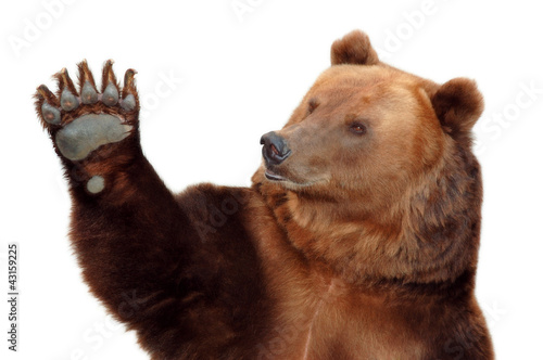 Photo  Bear welcomes you and waving his paw