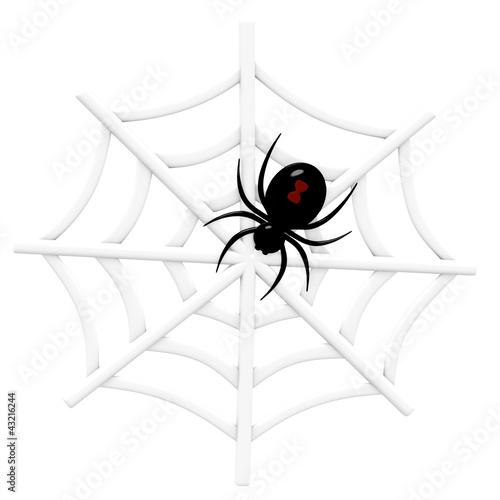 Photo  Black Widow Spider in Web