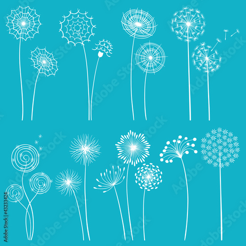 Set of dandelions