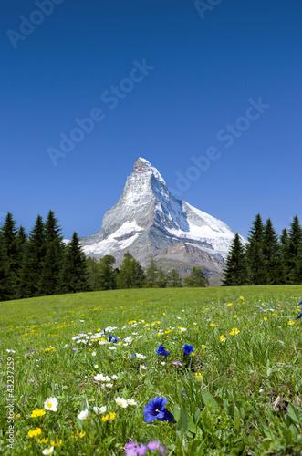 Photo  Matterhorn mit Bergwiese
