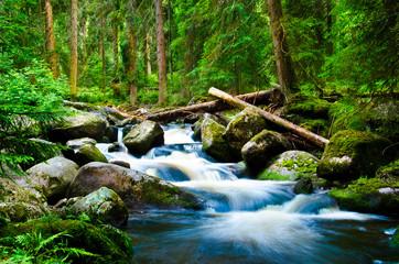 Fototapeta Wodospad Deep wood