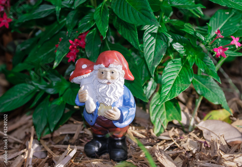 Fotografie, Obraz  Garden gnome