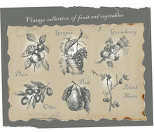 Fruits And Vegetables-original Artwork Converted To Vectors